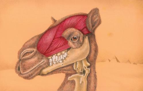 CamelHeadLOW