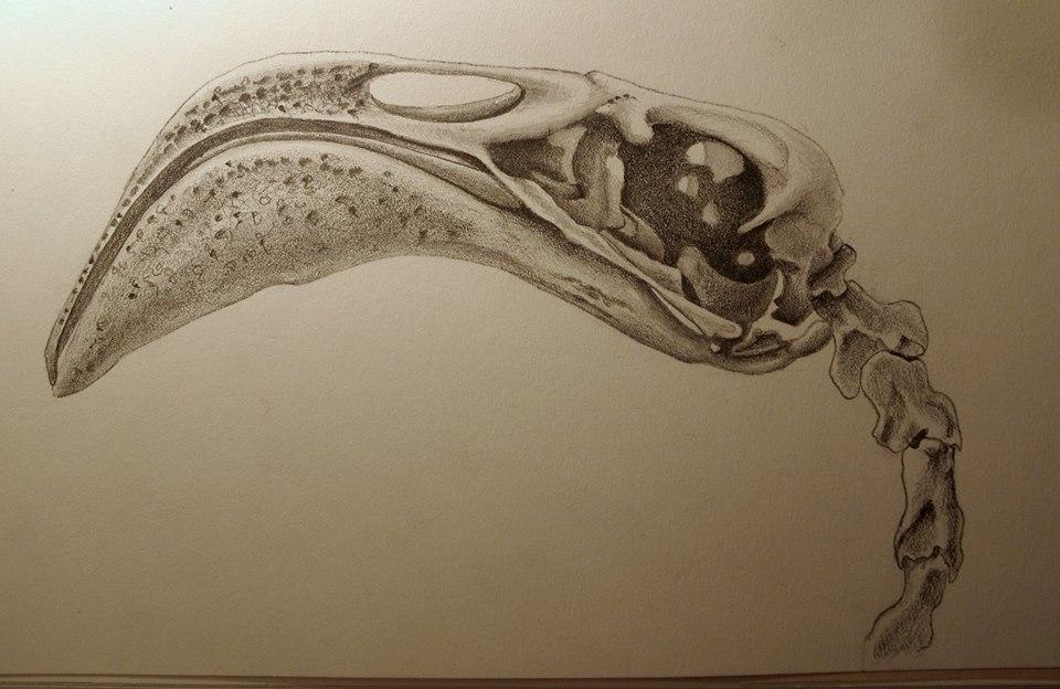 Natural Science Illustration Jody Marx
