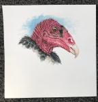 Turkey V illustration061019