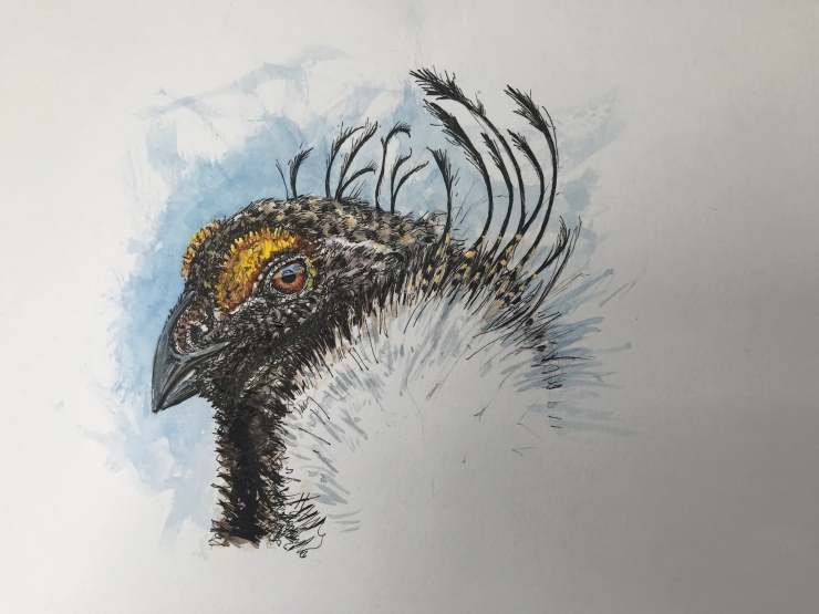 Sage grouse watercolor