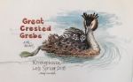 Grebe chicks onback