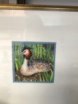 Grebe on Nest Framed2
