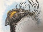 Sage grouse illus finishedclose