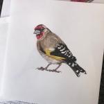 Europeon goldfinch illustration092719