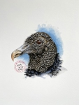 Black vulture print1of25
